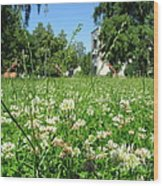 White Clover Field And The Playground Wood Print
