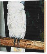 White Cockatiel-loreto Mx. Wood Print