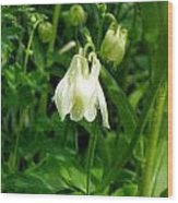 White Columbine On Green Wood Print
