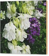 White Columbine With Purple Phlox Wood Print