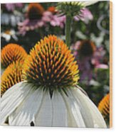 White Cone Flower Wood Print