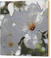 White Cordia Wood Print