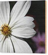 White Coreopsis Wood Print