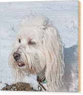 White Coton De Tulear Dog In Snow Wood Print