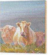 White Cows Painting Wood Print