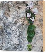 White Cyclamen Flowers Wood Print