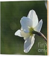White Daffodil Rear Profile Wood Print