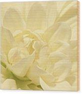 White Dahlia Dreams Wood Print