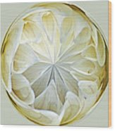 White Dahlia Orb Wood Print