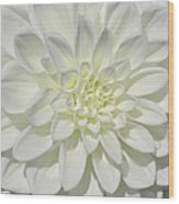 White Dahlia Square Wood Print