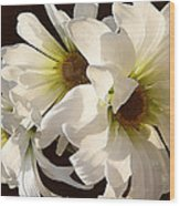 White Daisies In Sunshine Wood Print