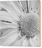 White Daisy Wood Print by Adam Romanowicz