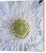 White Daisy Close Up Wood Print