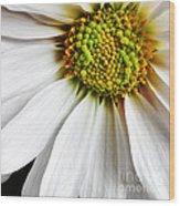 White Daisy Closeup Wood Print