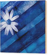 White Daisy On Blue Two Wood Print
