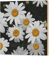 White Daisy's On The Rim Wood Print