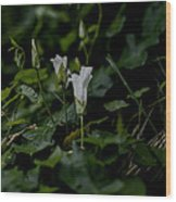 White Db Wood Print