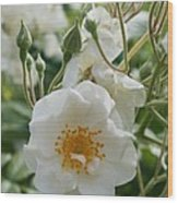 White Dog Rose And Buds Wood Print