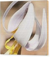 White Dog Tooth Violet Wood Print