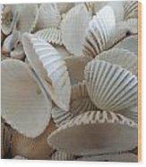 White Double Ark Shells Wood Print