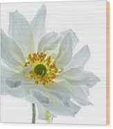 White Double Japanese Anemone Wood Print