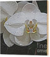 White Dream Orchid Wood Print