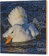 White Duck 3 Wood Print