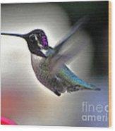White Eared Male Costa's Hummingbird Wood Print