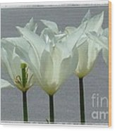 White Early Dawn Tulips White Bordered Wood Print