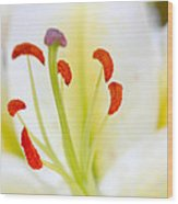 White Easter Lily Wood Print