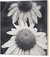 White Echinacea Flower Or Coneflower Wood Print by Adam Romanowicz