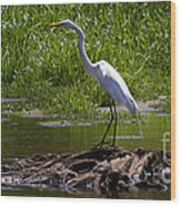 White Egret And Snapping Turtles Wood Print