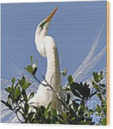 White Egret In Spring Wood Print