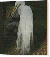 White Egret In The Shadows Wood Print