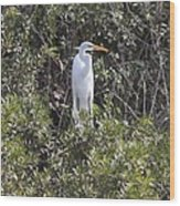 White Egret In The Swamp Wood Print