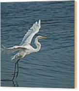 White Egret Landing Wood Print