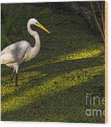 White Egret Wood Print
