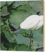 White Egret On Lilypads Wood Print