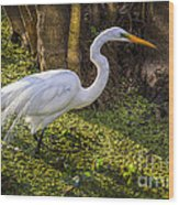 White Egret On The Hunt Wood Print