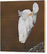 White Egret Preening Wood Print