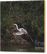 White Egret's Approach   #0615 Wood Print