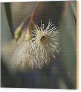 White Eucalyptus  Wood Print