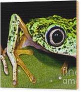 White-eyed Leaf Frog Wood Print