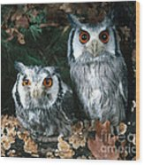 White Faced Scops Owl Wood Print