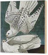 White Falcon Wood Print