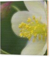 White Flower And Swirls Wood Print