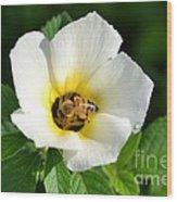 White Flower- Nectar Wood Print