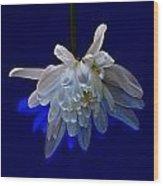 White Flower On Dark Blue Background Wood Print
