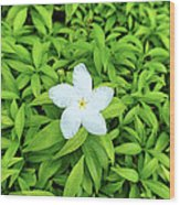White Flower On Green Wood Print