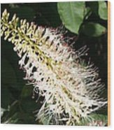 White Flower Panicle Wood Print